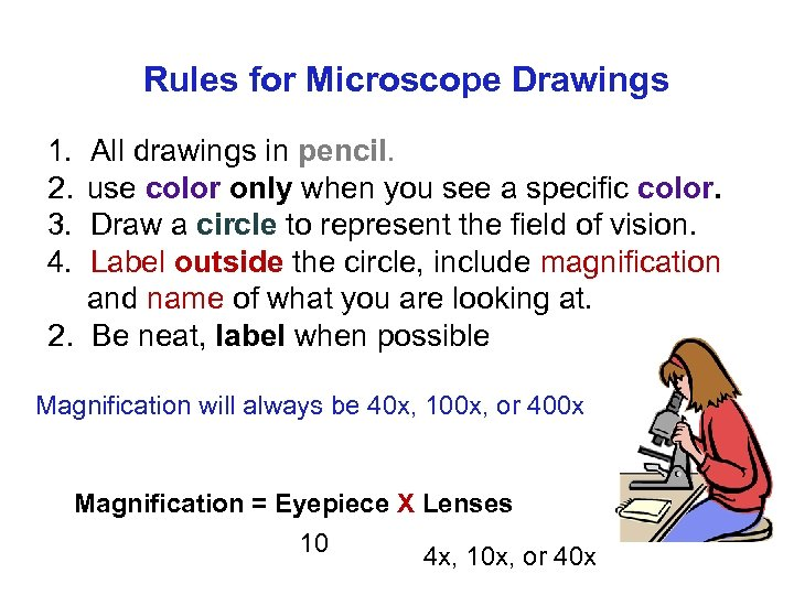 Rules for Microscope Drawings 1. All drawings in pencil. 2. use color only when