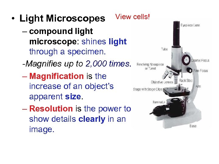 Chapter 1 • Light Microscopes View cells! – compound light microscope: shines light through
