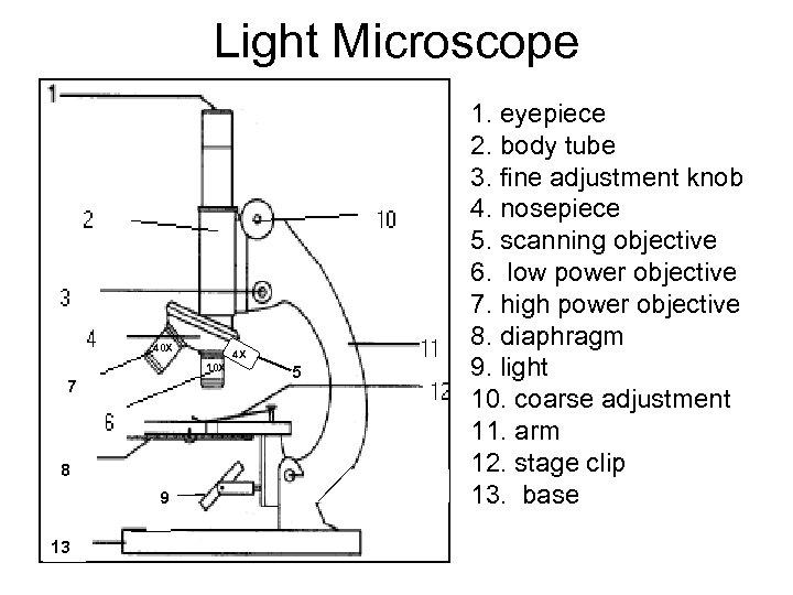 Light Microscope 10 X 4 X 10 X 7 8 8 9 13 5