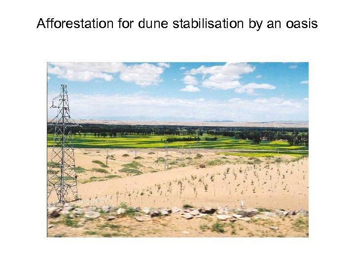 Afforestation for dune stabilisation by an oasis