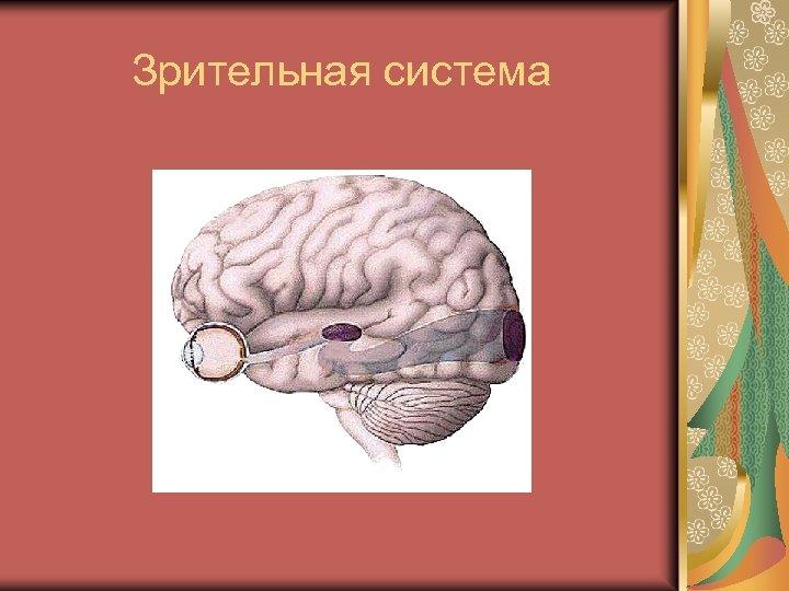 Зрительная система