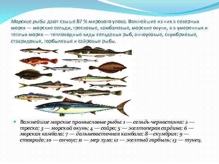 Морские рыбы дают свыше 87 % мирового улова. Важнейшие из них в северных морях