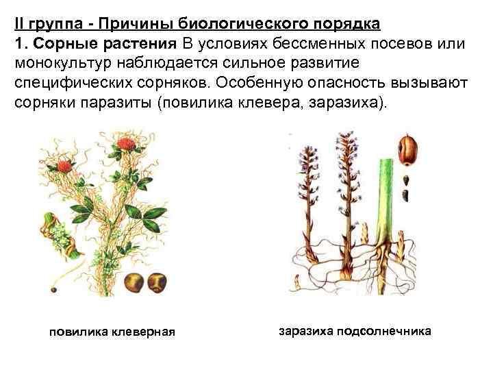 II группа - Причины биологического порядка 1. Сорные растения В условиях бессменных посевов или