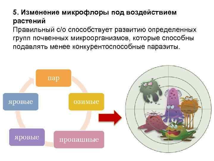 5. Изменение микрофлоры под воздействием растений Правильный с/о способствует развитию определенных групп почвенных микроорганизмов,