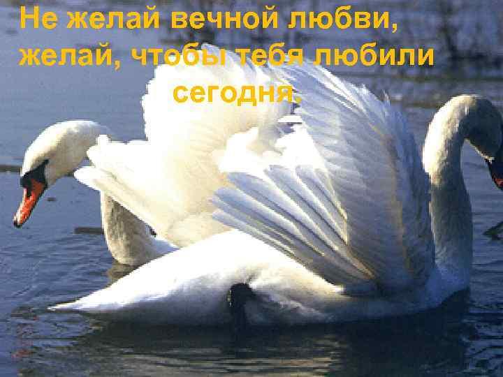 Не желай вечной любви, желай, чтобы тебя любили сегодня.