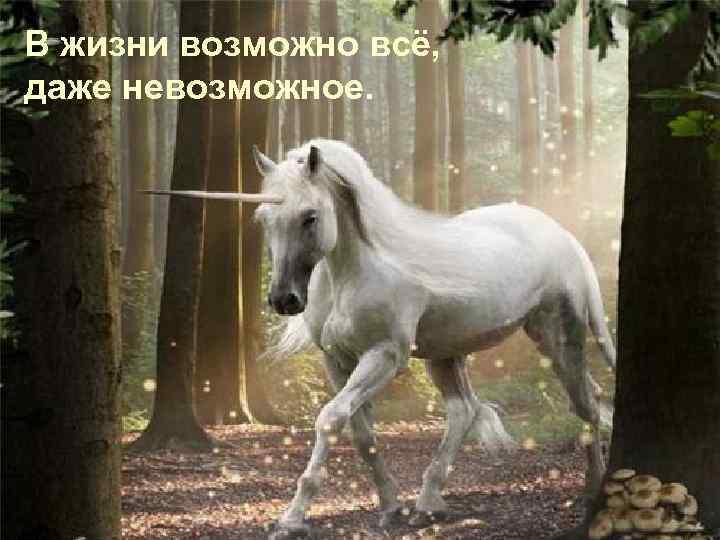 В жизни возможно всё, даже невозможное.