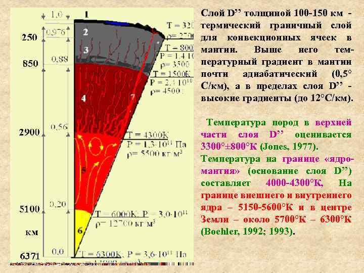 Слой D'' толщиной 100 -150 км - термический граничный слой для конвекционных ячеек в