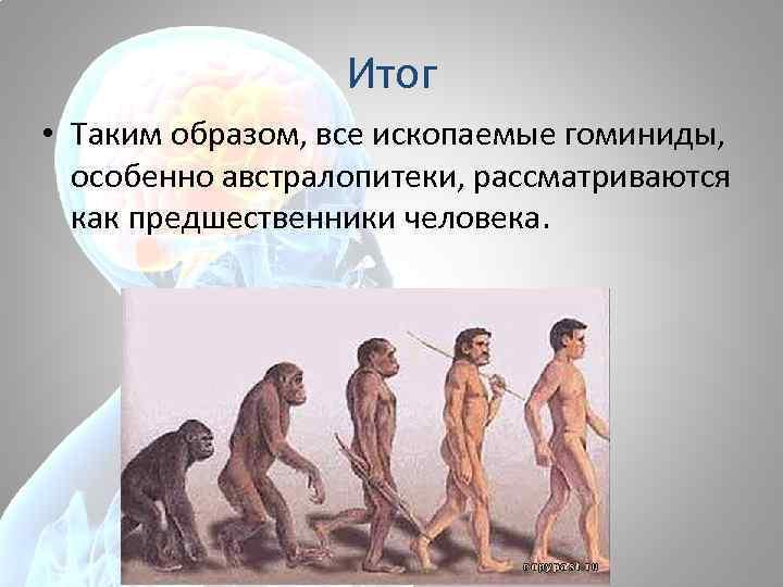 Итог • Таким образом, все ископаемые гоминиды, особенно австралопитеки, рассматриваются как предшественники человека.