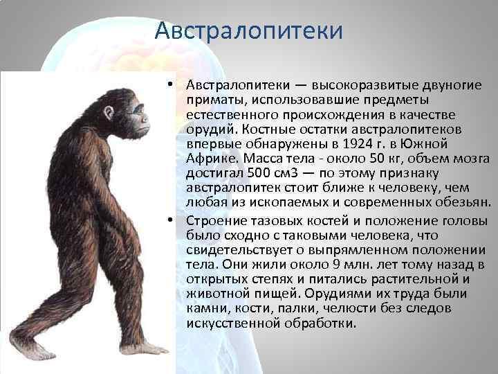 Австралопитеки • Австралопитеки — высокоразвитые двуногие приматы, использовавшие предметы естественного происхождения в качестве орудий.