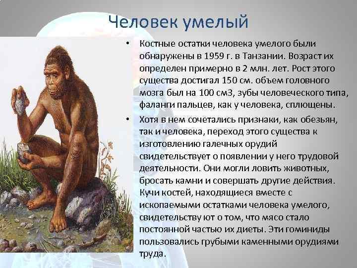 Человек умелый • Костные остатки человека умелого были обнаружены в 1959 г. в Танзании.