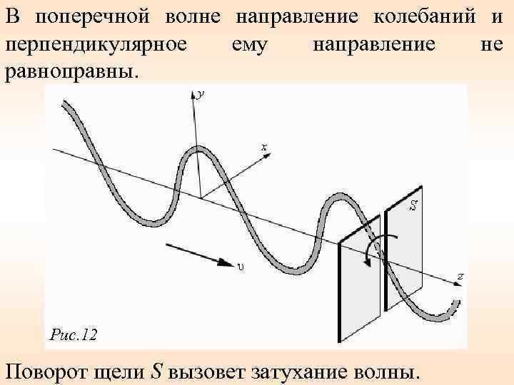 В поперечной волне направление колебаний и перпендикулярное ему направление не равноправны. Рис. 12 Поворот