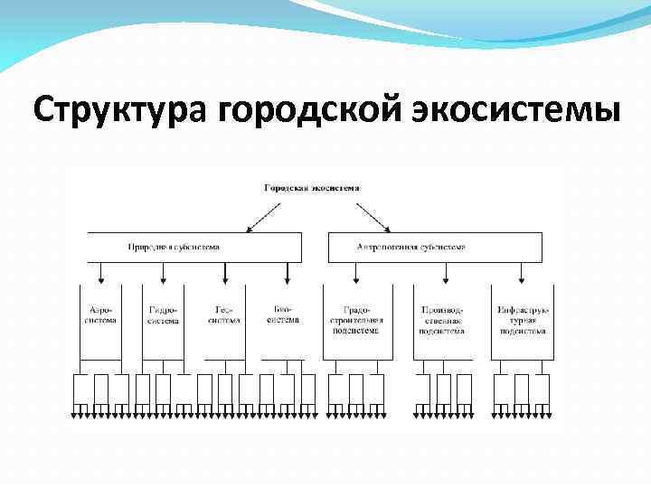 Структура городской экосистемы