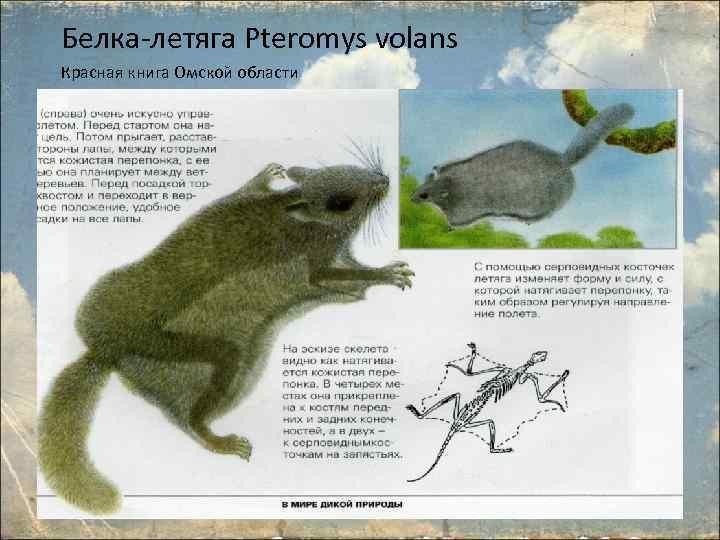 дракономании картинки животные занесенные в красную книгу черлакского района омской области этом поговорим сегодня