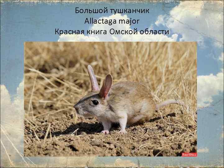 Картинки животные занесенные в красную книгу черлакского района омской области