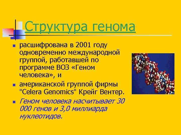 Структура генома n n n расшифрована в 2001 году одновременно международной группой, работавшей по