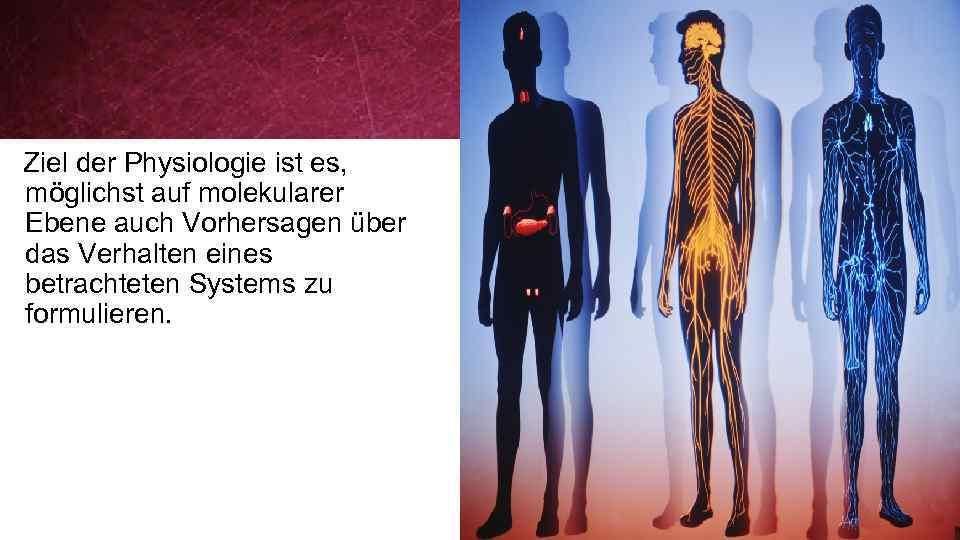 Berühmt Anatomie Und Physiologie Der Ebene 2 Prüfung Galerie ...