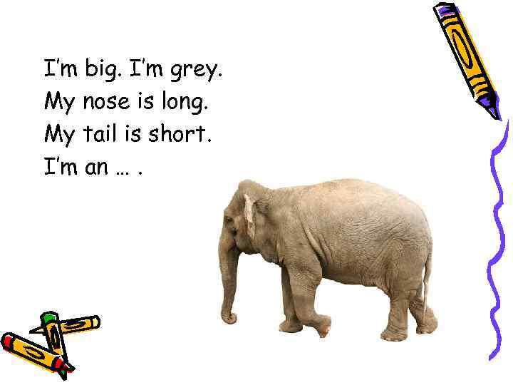 I'm big. I'm grey. My nose is long. My tail is short. I'm an