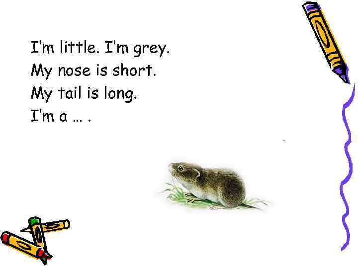 I'm little. I'm grey. My nose is short. My tail is long. I'm a