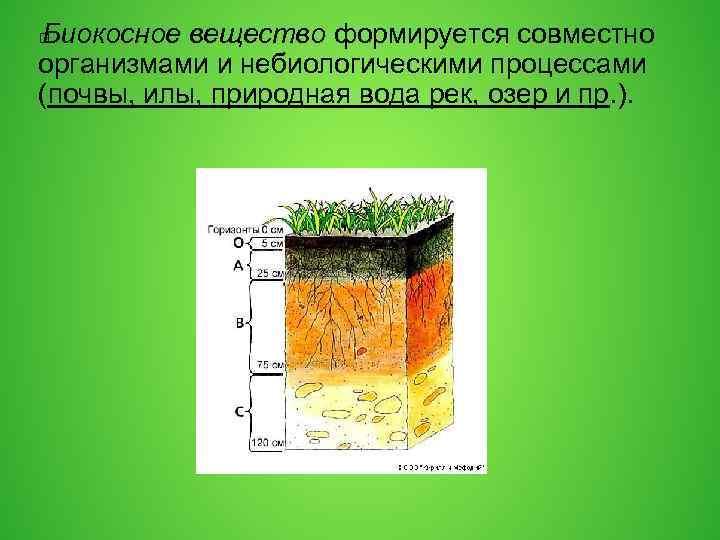 Биокосное вещество формируется совместно организмами и небиологическими процессами (почвы, илы, природная вода рек, озер