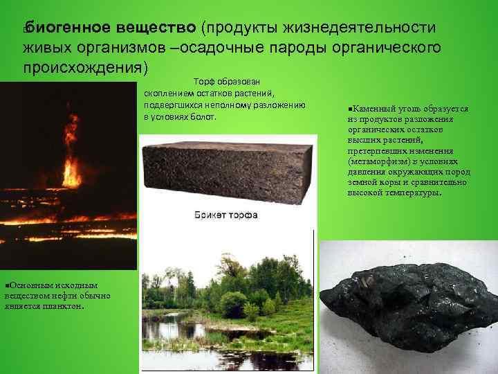 биогенное вещество (продукты жизнедеятельности живых организмов –осадочные пароды органического происхождения) Торф образован скоплением остатков