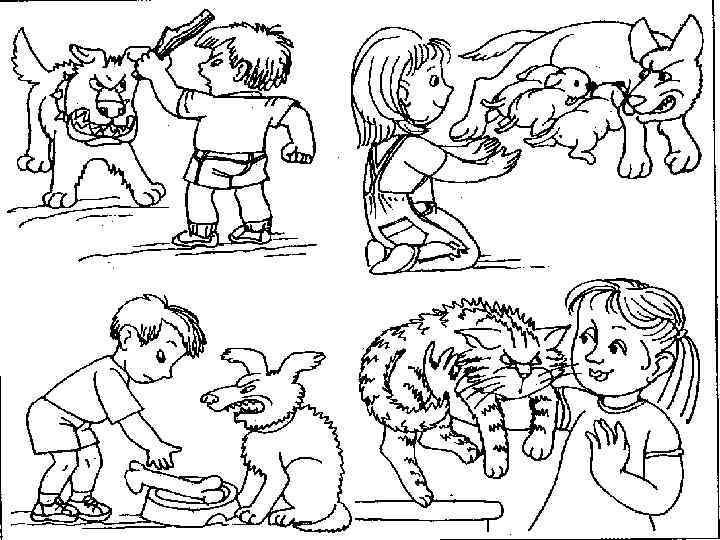 картинки правила поведения с бездомными животными коктейль часто