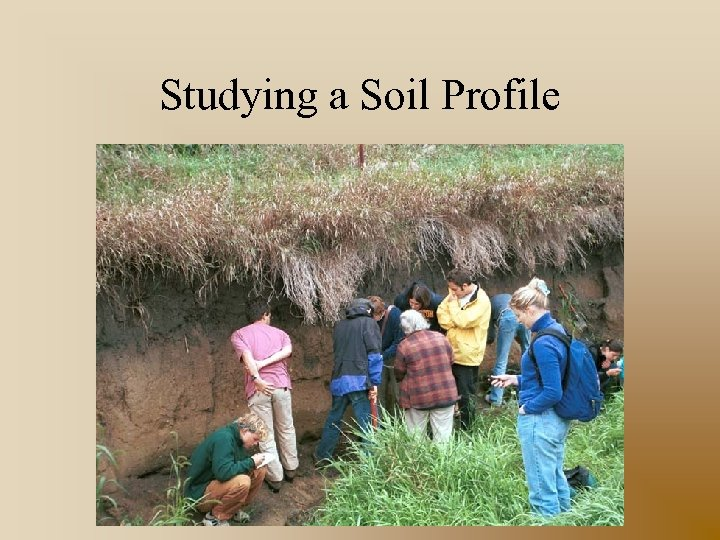 Studying a Soil Profile