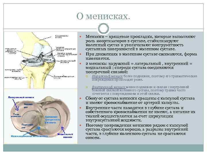О менисках. Мениски – хрящевые прокладки, которые выполняют роль амортизаторов в суставе, стабилизируют коленный
