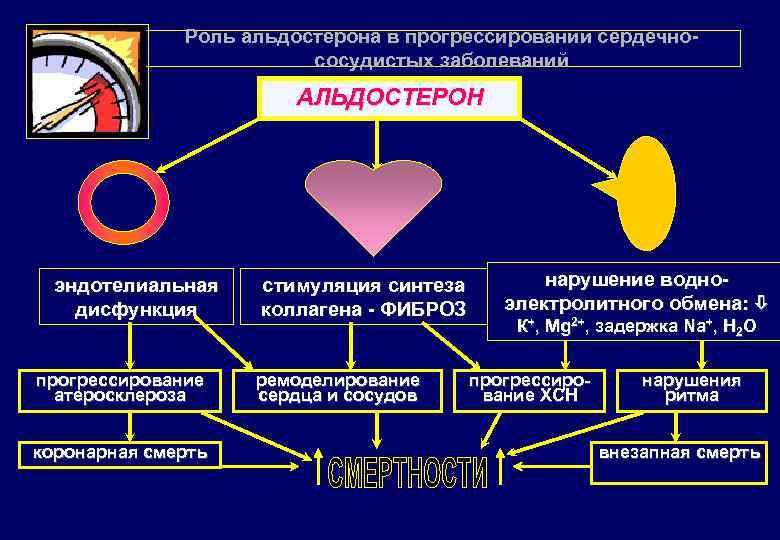 Картинки сердечно-сосудистый континуум