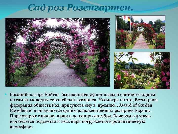 Сад роз Розенгартен. Розарий на горе Бойтиг был заложен 29 лет назад и считается
