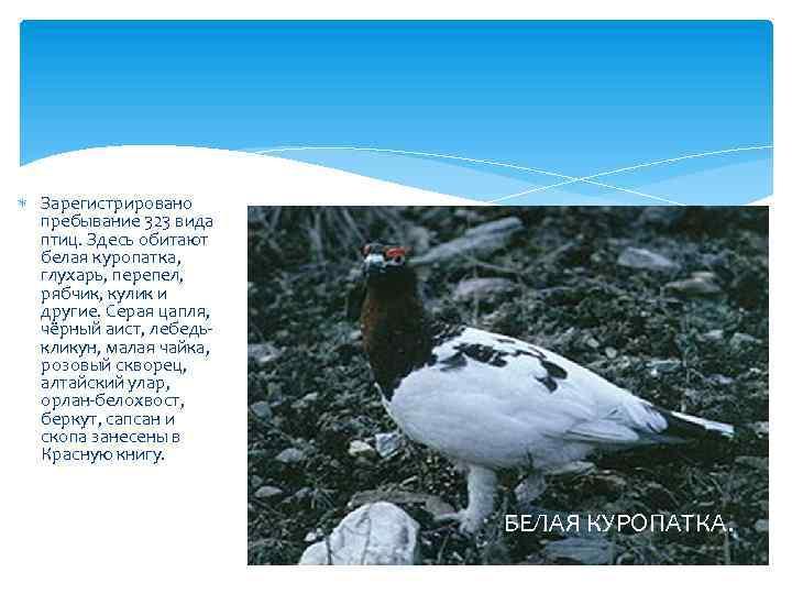 Зарегистрировано пребывание 323 вида птиц. Здесь обитают белая куропатка, глухарь, перепел, рябчик, кулик