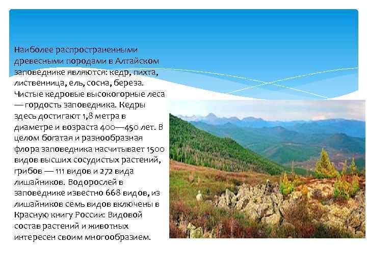 Наиболее распространенными древесными породами в Алтайском заповеднике являются: кедр, пихта, лиственница, ель, сосна, береза.