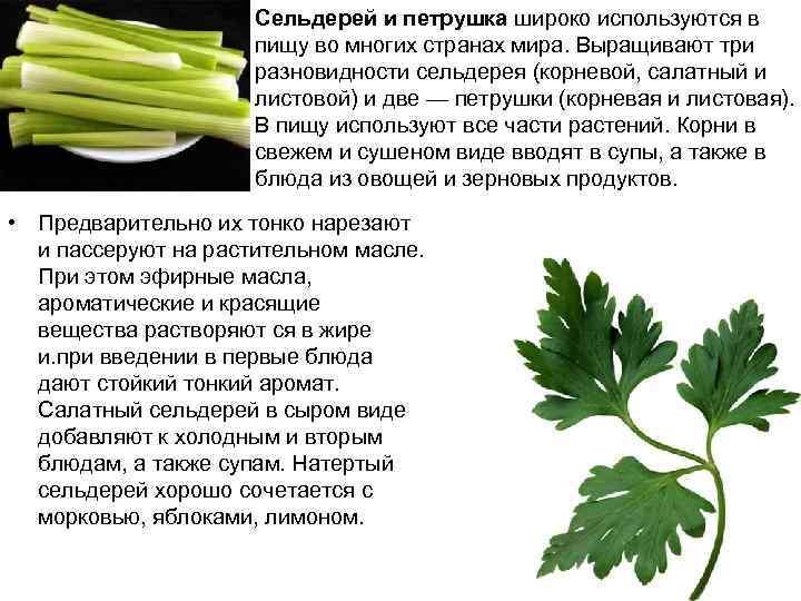Сельдерей и петрушка широко используются в пищу во многих странах мира. Выращивают три разновидности