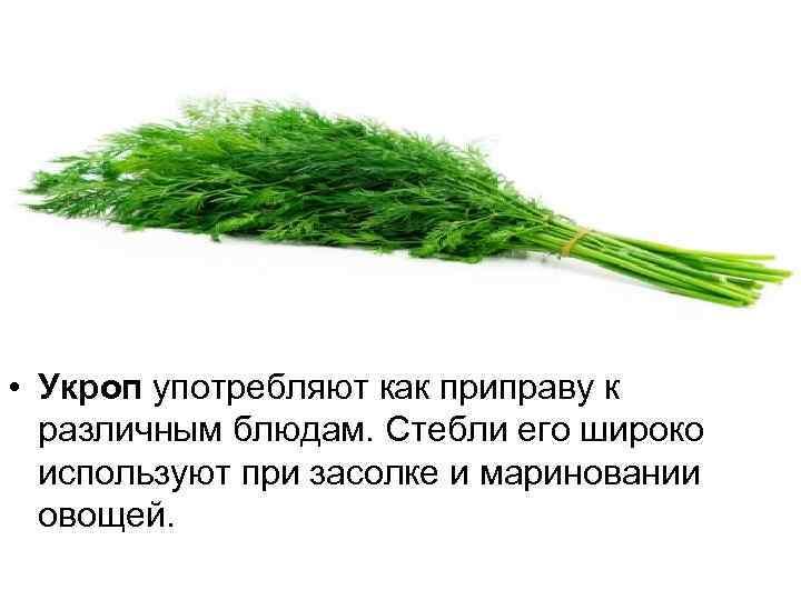 • Укроп употребляют как приправу к различным блюдам. Стебли его широко используют при