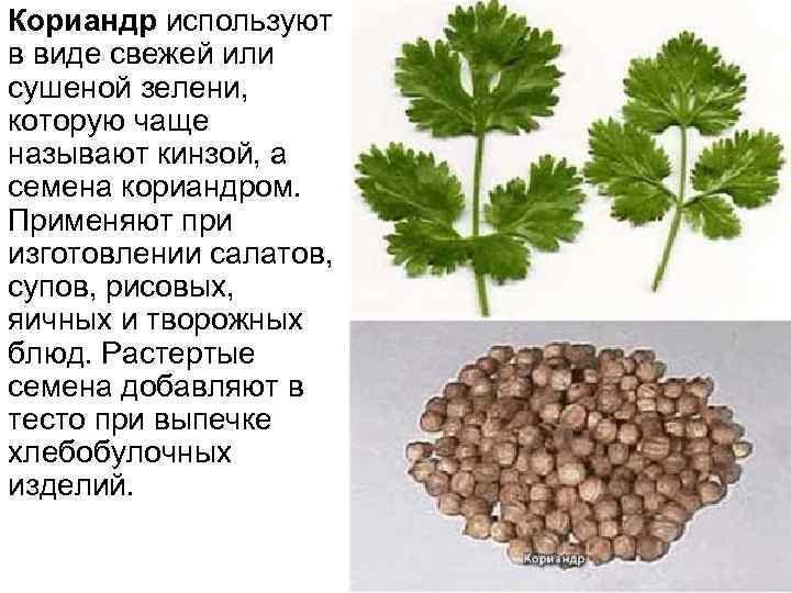 Кориандр используют в виде свежей или сушеной зелени, которую чаще называют кинзой, а семена
