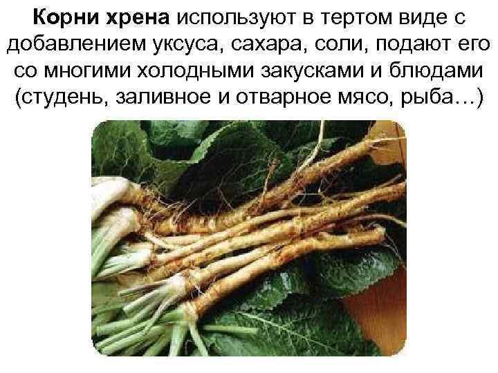 Корни хрена используют в тертом виде с добавлением уксуса, сахара, соли, подают его со