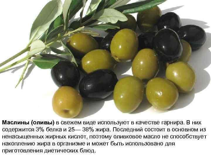 Маслины (оливы) в свежем виде используют в качестве гарнира. В них содержится 3% белка