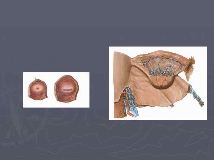 Деформация клитора женских половых органов проблема