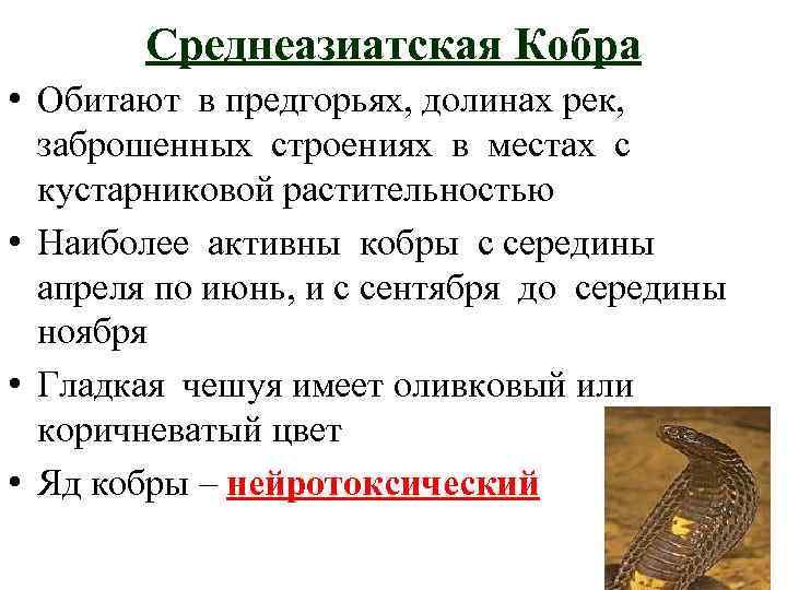 Среднеазиатская Кобра • Обитают в предгорьях, долинах рек, заброшенных строениях в местах с кустарниковой