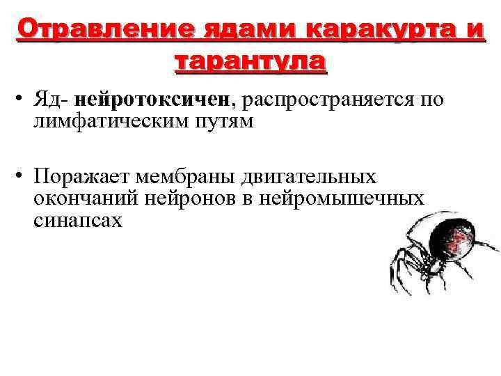 Отравление ядами каракурта и тарантула • Яд- нейротоксичен, распространяется по лимфатическим путям • Поражает