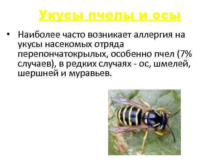 Укусы пчелы и осы • Наиболее часто возникает аллергия на укусы насекомых отряда перепончатокрылых,
