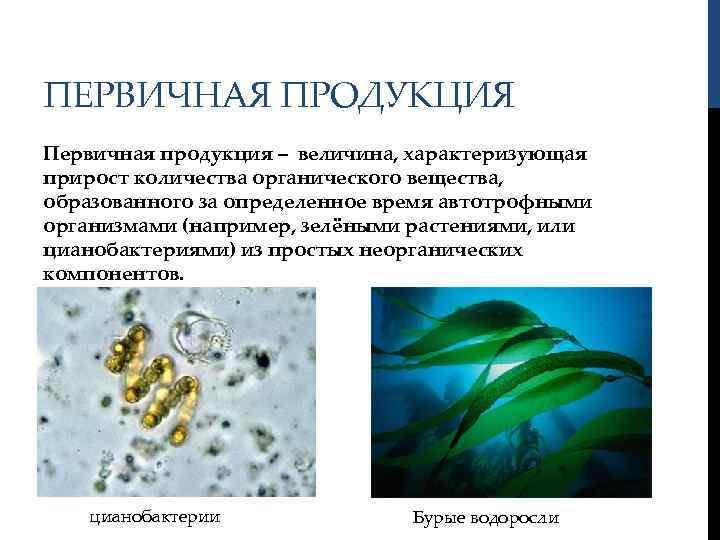 ПЕРВИЧНАЯ ПРОДУКЦИЯ Первичная продукция – величина, характеризующая прирост количества органического вещества, образованного за определенное