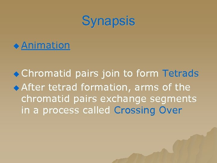 Synapsis u Animation u Chromatid pairs join to form Tetrads u After tetrad formation,