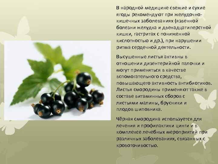 В народной медицине свежие и сухие ягоды рекомендуют при желудочнокишечных заболеваниях (язвенной болезни желудка