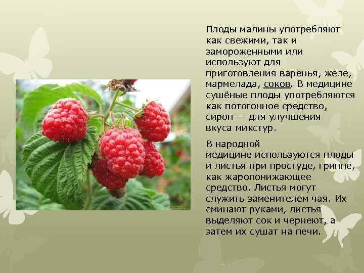 Плоды малины употребляют как свежими, так и замороженными или используют для приготовления варенья, желе,