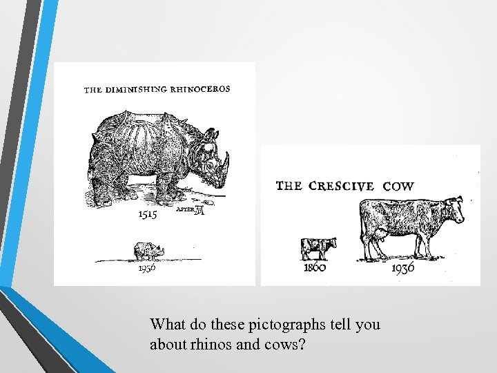What do these pictographs tell you about rhinos and cows?