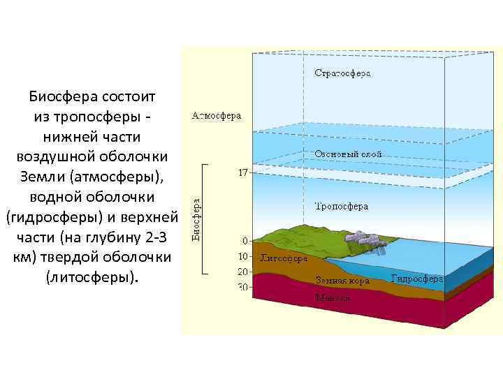 Биосфера состоит из тропосферы - нижней части воздушной оболочки Земли (атмосферы), водной оболочки (гидросферы)