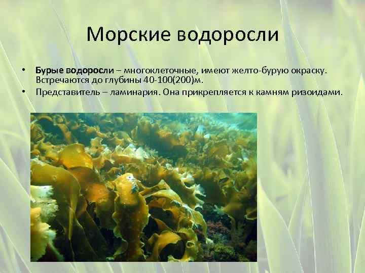 две картинки водоросли одно и многоклеточные узнать