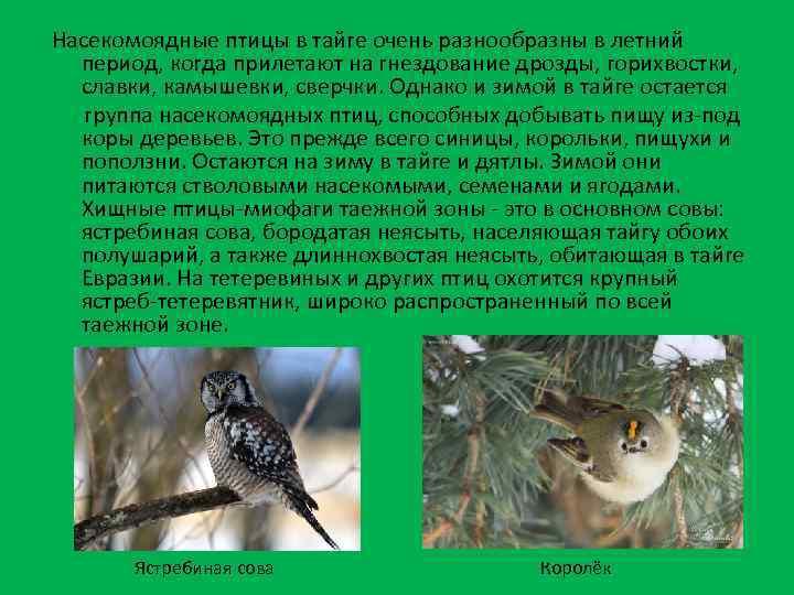 Насекомоядные птицы в тайге очень разнообразны в летний период, когда прилетают на гнездование дрозды,