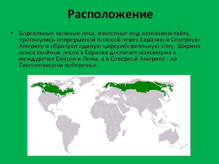 Расположение • Бореальные хвойные леса, известные под названием тайга, протянулись непрерывной полосой через Евразию