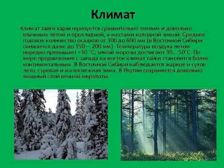 Климат тайги характеризуется сравнительно теплым и довольно влажным летом и прохладной, а местами холодной